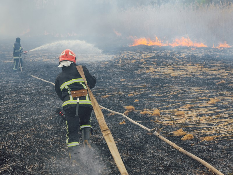 Repeated fires dampen forests' ability to absorb carbon dioxide, study finds
