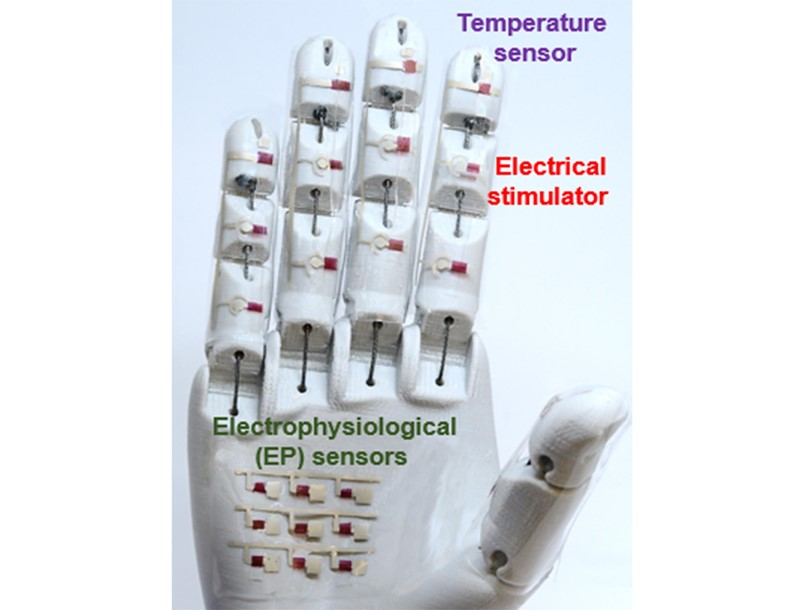 A medical robotic hand is just one potential application for the rubbery electronics reported by researchers.