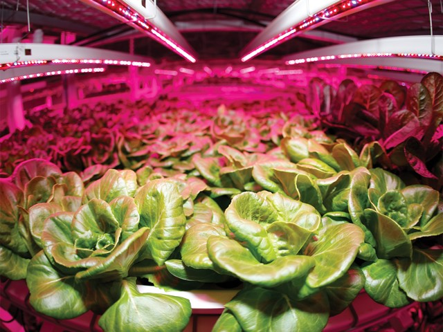 A Light Salad Leds Revolutionise The Horticulture Industry