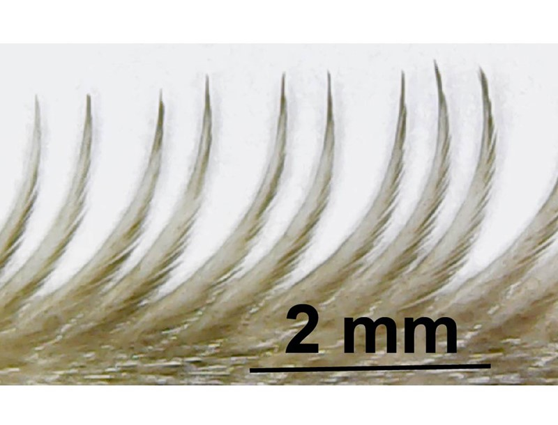 Up close image of Owl serration feather