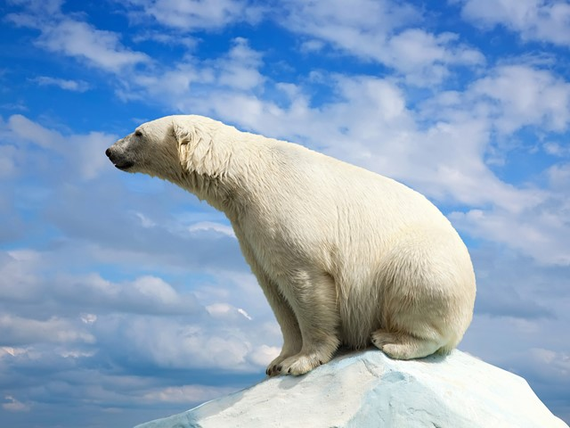 Global warming predicted to kill off 'most' endangered