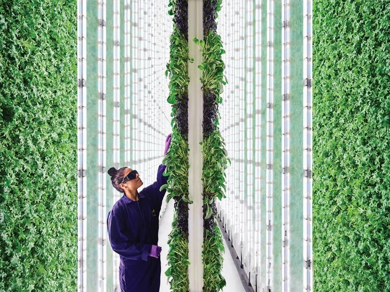 San Fran vertical farm - inline