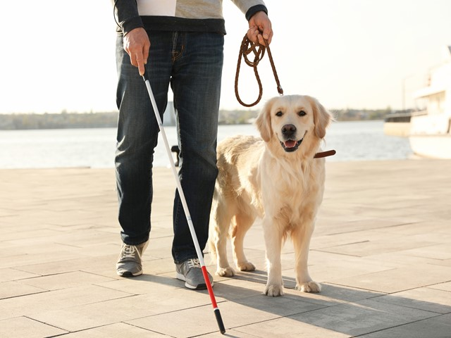 Robotic Guide Dog Offers Alternative To Real Life Canine For Visually Impaired People E T Magazine