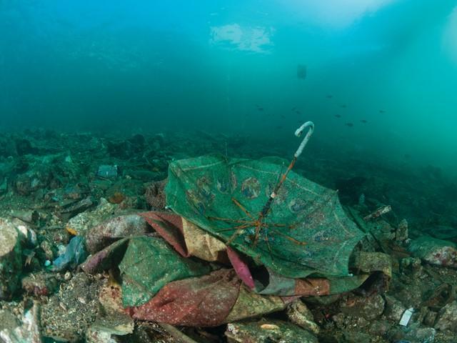 Underwater Photographer Captures Vast Garbage Patch Off The Coast Of Honduras