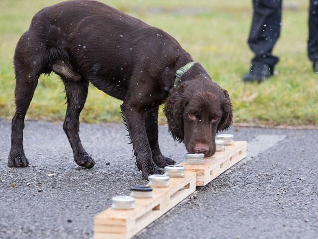 Image result for sniff dog